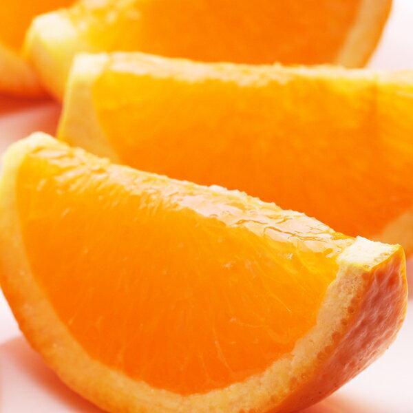 <5月発送>厳選きよみオレンジ4kg+120g(傷み補償分)【樹上完熟清見タンゴール】【北海道・沖縄配送不可】