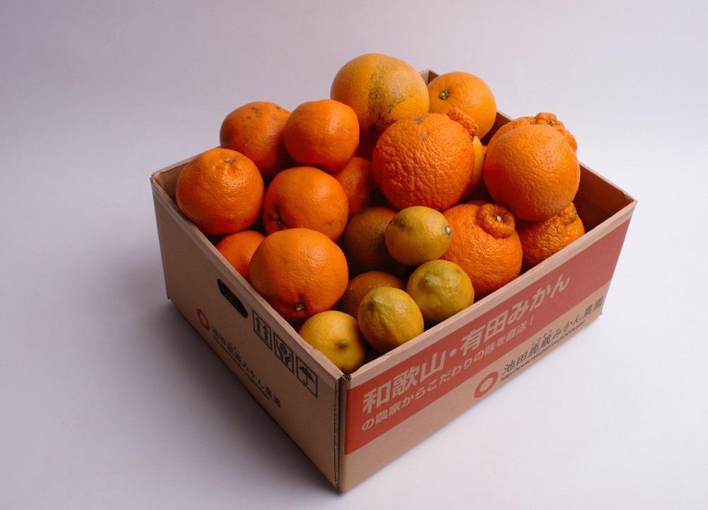 <1月より発送>厳選 柑橘詰合せ3kg+90g(傷み補償分)【北海道・沖縄配送不可】