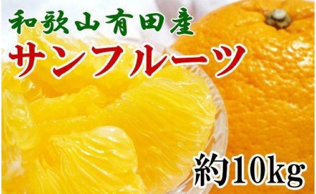 和歌山有田産サンフルーツ約10kg(M〜3Lサイズおまかせ)