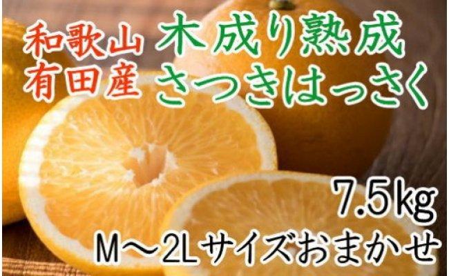 こだわりの和歌山有田産木成り熟成さつき八朔7.5Kg(M〜2Lサイズおまかせ)