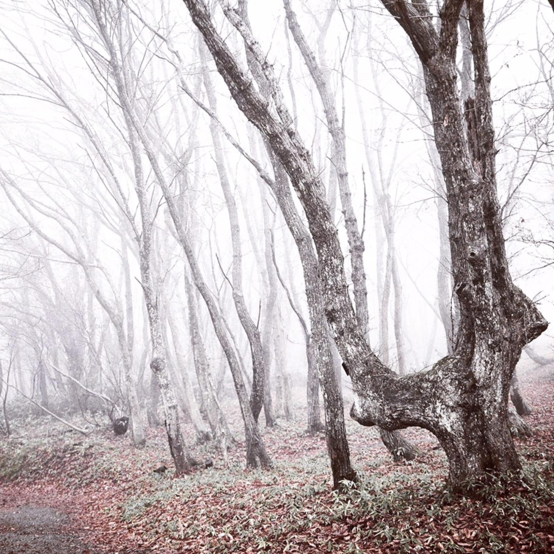 冬の木谷沢渓流