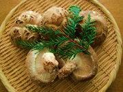 乾椎茸の詰め合わせ 160g / SAC中尾 椎茸屋 0216
