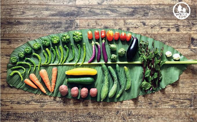 瀬戸内産 旬の野菜セット