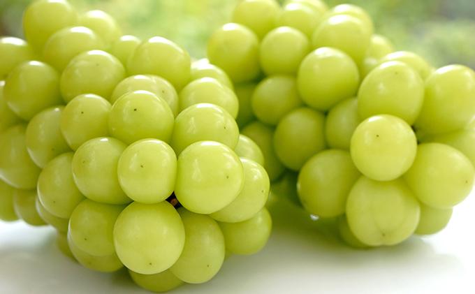 晴れの国おかやまのフルーツ定期便 白桃 2kg(5玉~7玉)シャインマスカット 2房(合計1.4kg以上)