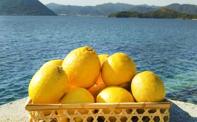 農薬・除草剤を使わず育てたレモン5kg、活動レポートをお届け
