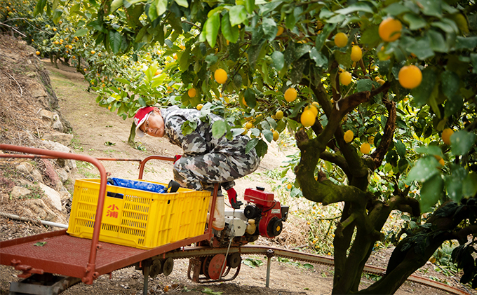 平飼い有精卵「島たまご」10個+2個(保障付)、農薬・除草剤を使わず育てたレモン4kg、活動レポートをお届け