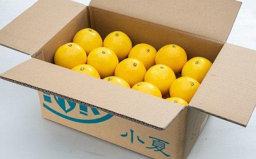 熟成 露地小夏 3kg 柑橘 フルーツ 果物 送料無料<ME001>