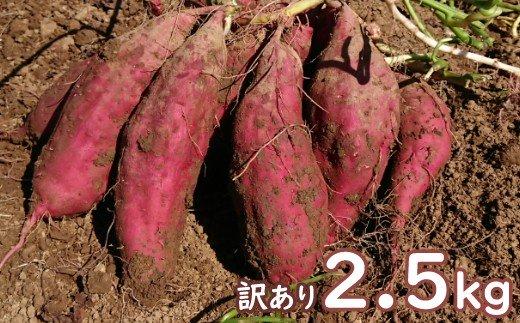 【訳あり】西山きんとき芋(さつまいも)2.5kg