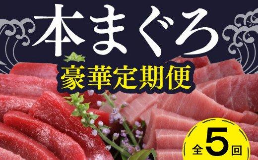 厳選天然本マグロ豪華定期便【全5回】