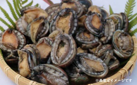 【4・5月発送限定。漁師直送!】コロナ乗り切れ豪華海鮮BBQセット