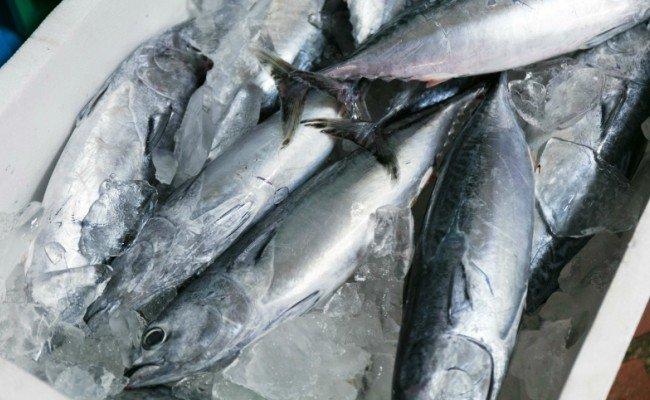 おさしみセット【3〜5品】<旬の魚の刺身セット扱いやすいサクにしてお届け・鮮度抜群>