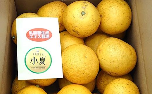 【B-127】訳あり家庭用小夏10キロ(白浜農園)
