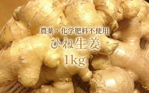 【AE-41】洗いひね生姜(囲い生姜)1kg