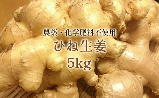 【AA-7】洗いひね生姜(囲い生姜)5kg