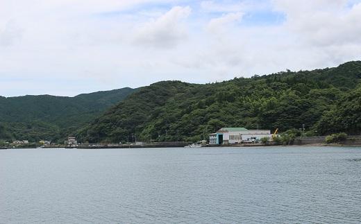 【B-145】コロナ緊急支援品 土佐清水の鮮魚詰め合わせ