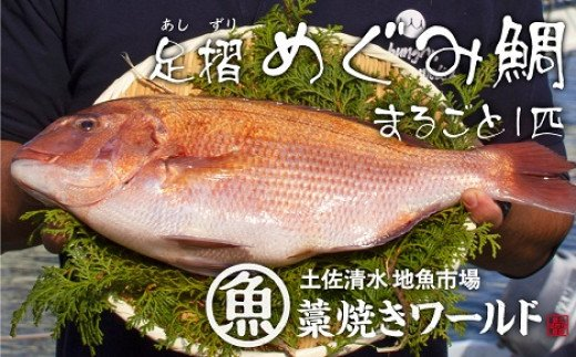 【AF-12】足摺めぐみ鯛