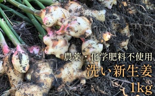 【L-60】新生姜1kg(洗い生姜)