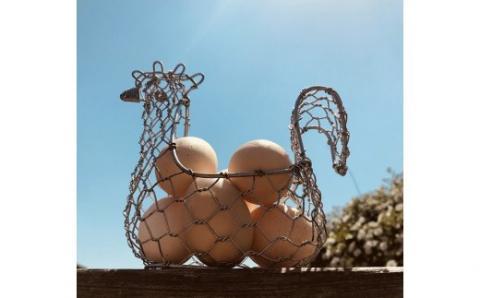 【N-17】ましくんの完全放し飼い土佐ジローの卵(12個入り×2箱)