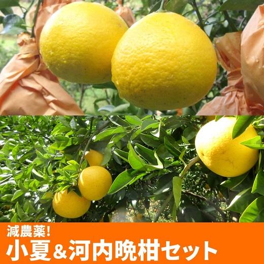 【W-17】訳あり・減農薬!小夏&河内晩柑セット(併せて約5K)