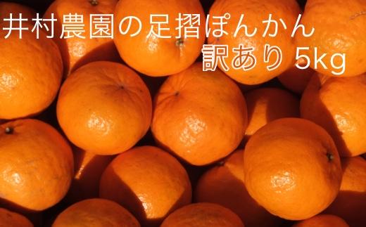 【AE-15】【訳あり】井村農園の足摺ぽんかん(5kg)