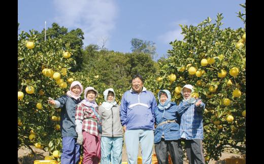 【W-12】早川農園のぽんかん【5kg】