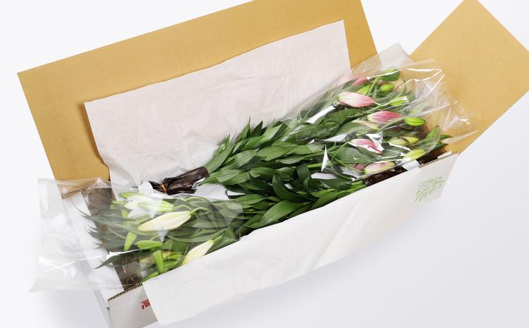 花言葉は「気高さ」美しいオリエンタル・リリー10~15本セット