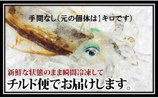 【手間いらず】鮮度抜群「アオリイカ」刺身・イカそうめんに!750g