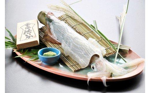 【チャレンジ応援品】福岡県宗像産 活剣先イカ姿造り2本入り_KA0660