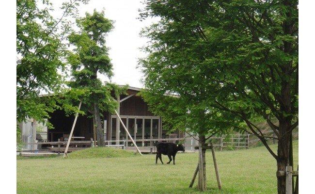 KA0130_お米で育てたむなかた牛 切り落とし 1kg (牧場直送)