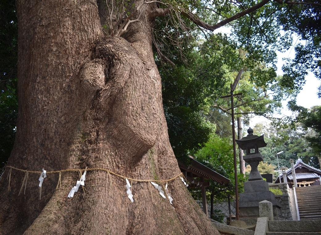 むーみんの木