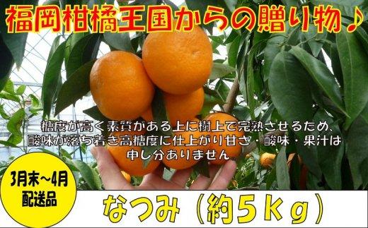 A542.【予約受付・期間限定商品】福岡柑橘王国・なつみ(3月末~4月初旬配送)
