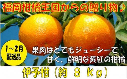 A539.【予約受付・期間限定商品】福岡柑橘王国・伊予柑(1月~2月配送予定)