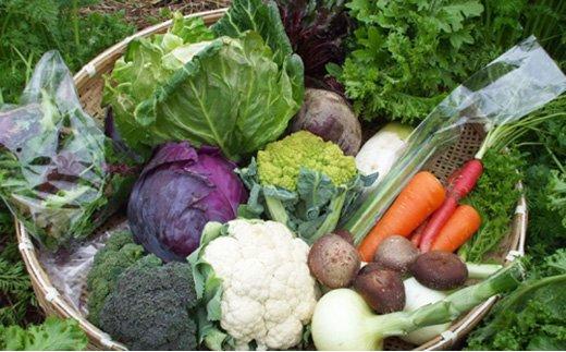 【16~17品 / 48回定期便】あいちゃん農園の「よしのがり野菜」セット(ラージ) [FAA012]