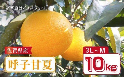 【4月下旬以降発送】佐賀県産「呼子甘夏」約10kg 【縁ツなぎ】 [FCC012]