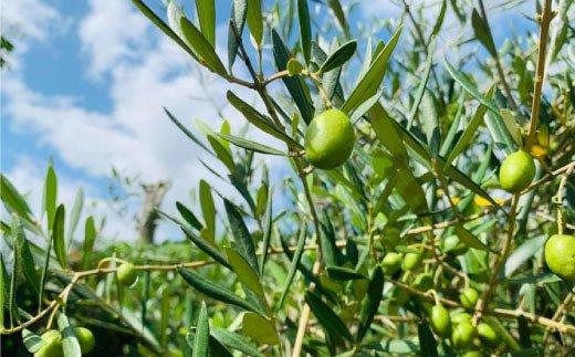 吉野ヶ里で育った無農薬オリーブから搾ったオリーブオイル3本 [FBK010]【吉野ヶ里まちづくり会】