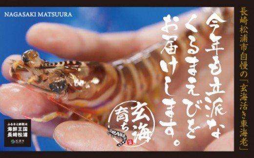 【B4-032】玄海活きくるまえび400g入り(10~20尾)