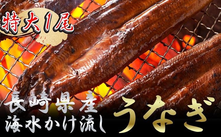 【B5-014】数量限定!海水かけ流しうなぎ蒲焼 特大サイズ1尾