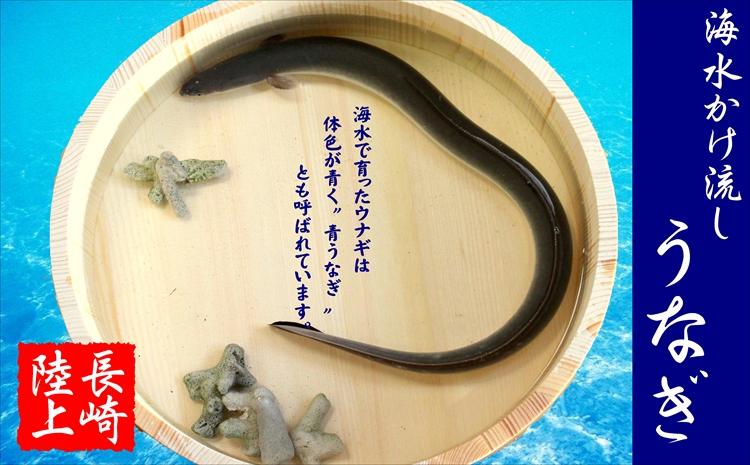 【B5-013】数量限定!海水かけ流しうなぎ蒲焼2尾