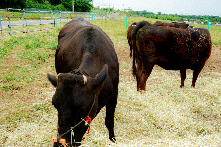 【くまもと黒毛和牛】A5ランク熊本県産黒毛和牛450g(焼肉用)