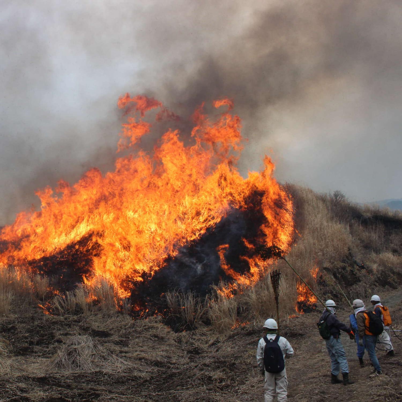 牧野野焼き