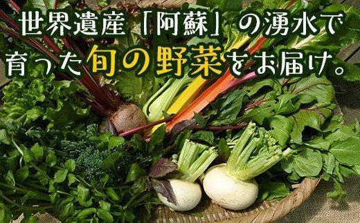 「南阿蘇オーガニック」旬の野菜セット10種類以上詰め合わせ