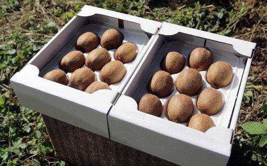 【先行予約】化学肥料等を使わずに育てた濃厚な味わいのキウイフルーツ(ヘイワード)18玉