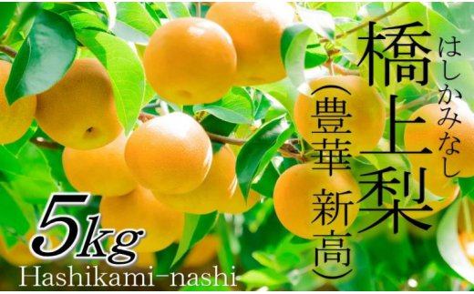 辰口農園の橋上梨5kg(品種:豊華/新高)