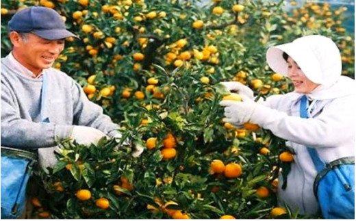 【予約受付開始】国東みかん5kg/小玉農園