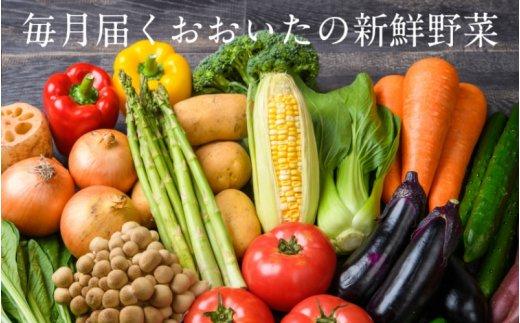 おおいたの旬野菜定期便※約15品目を計6回発送