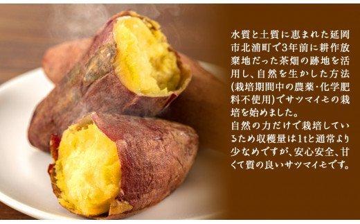 【先行予約】延岡産無農薬栽培さつまいも(シルクスイート)5kg(2021年9月発送開始)