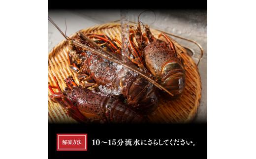 【訳あり】伊勢海老1kg※冷凍※