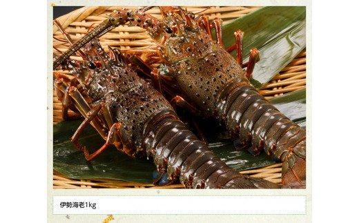 漁協直送!日向灘獲れ伊勢海老1kg(2~4尾)