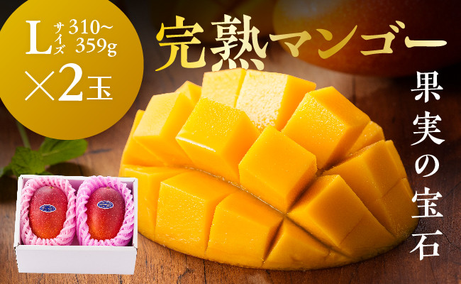 ※糖度15度以上※完熟マンゴー「果実の宝石」L×2玉(令和3年発送)