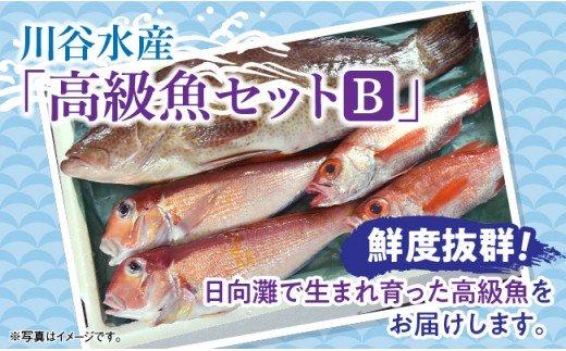 川谷水産『高級魚セットB』